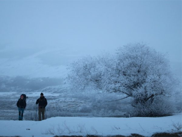 Paine invierno